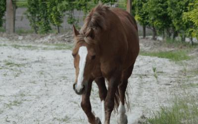 Waarom paarden meteen weten hoe je in je vel zit